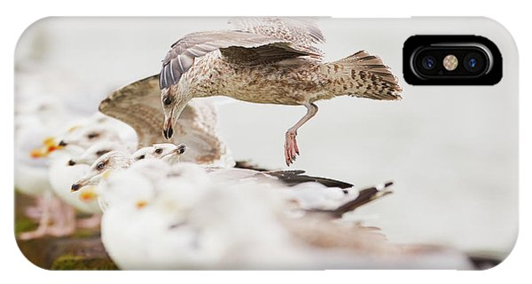 IPhone Case featuring the photograph European Herring Gulls In A Row, A Landing Bird Above Them by Nick Biemans