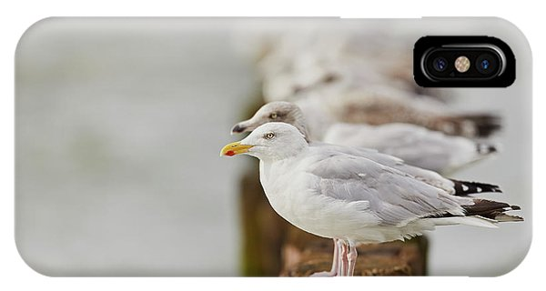 European Herring Gulls In A Row Fading In The Background IPhone Case