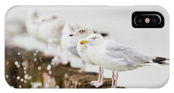 IPhone Case featuring the photograph European Herring Gulls In A Row  by Nick Biemans