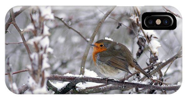 European Robin In The Snow At Christmas IPhone Case