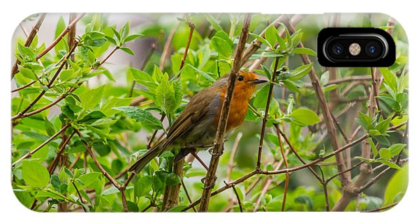 European Robin IPhone Case