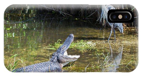 Everglades 431 IPhone Case