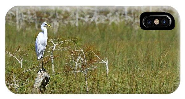 Everglades 451 IPhone Case