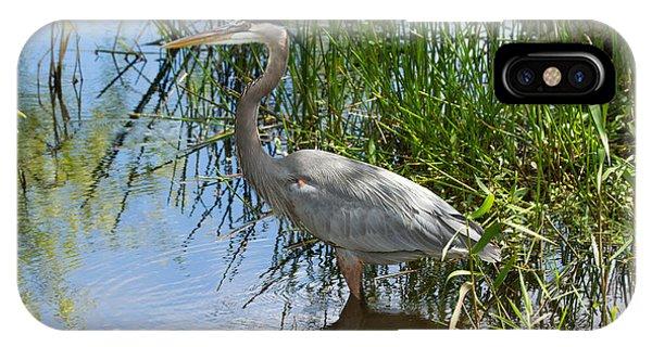 Everglades 572 IPhone Case