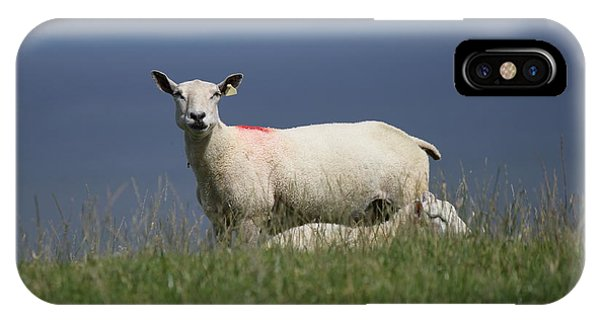 Ewe Guarding Lamb IPhone Case