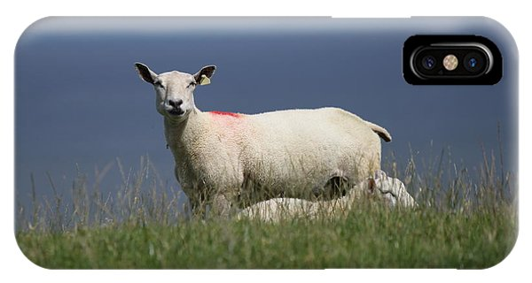Ewe Guarding Lamb IPhone Case