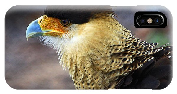 Excited Caracara IPhone Case