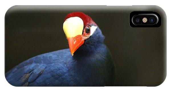 Exotic Bird IPhone Case