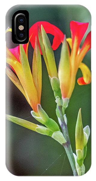 IPhone Case featuring the photograph Exotic Flowers by Kate Brown