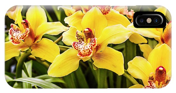 Orchid iPhone Case - Exotic Orchids  by Jorgo Photography - Wall Art Gallery