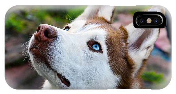 Expressive Siberian  Husky Photo C62017 IPhone Case