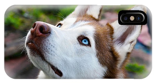 Expressive Siberian  Husky Photo C62017 IPhone Case