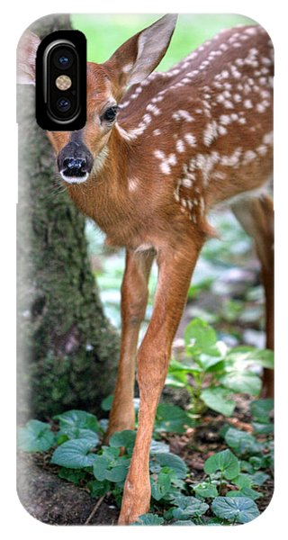 Eye To Eye With A Wide - Eyed Fawn IPhone Case