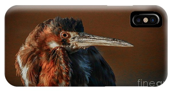 Eye To Eye With Heron IPhone Case