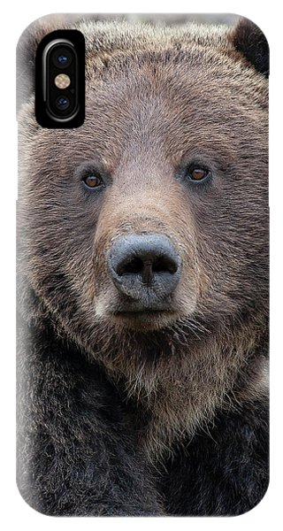 Face Of The Grizzly IPhone Case