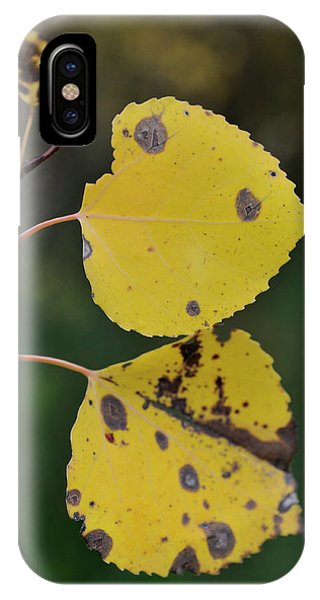 IPhone Case featuring the photograph Fading Aspen I by Ron Cline