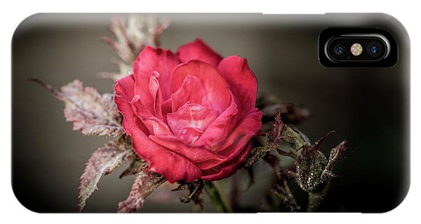IPhone Case featuring the photograph Fading Beauty by Allin Sorenson