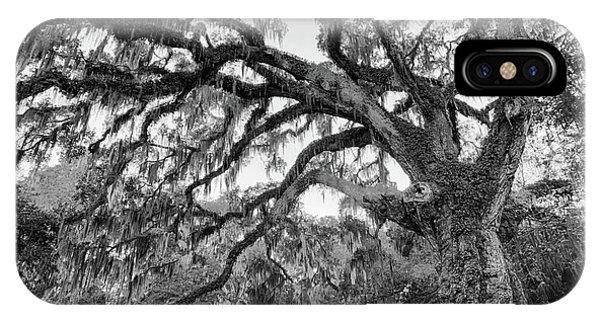 Fairchild Tree IPhone Case