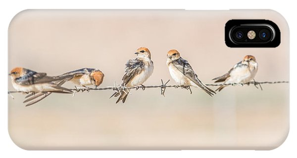 Fairy Martins IPhone Case