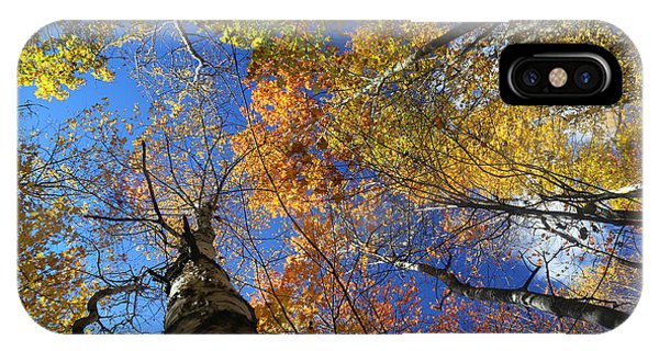 Fall Canopy Patterns 6 IPhone Case