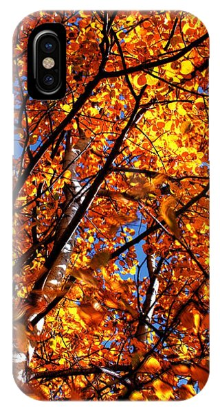 Fall Colours IPhone Case