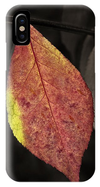 Fall Elder Leaf IPhone Case