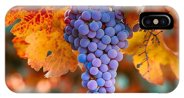 Fall Grapes From The Yakima Valley,  IPhone Case