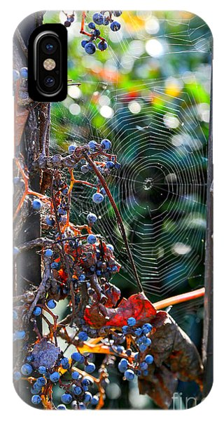 iPhone Case - Fall Grapes With Spider Web by Carol Groenen