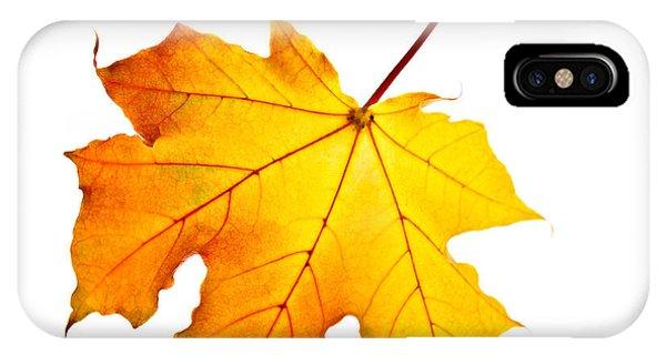 Leaf iPhone Case - Fall Maple Leaf by Elena Elisseeva