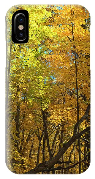 Fall Maples- Uw Arboretum  - Madison - Wisconsin IPhone Case