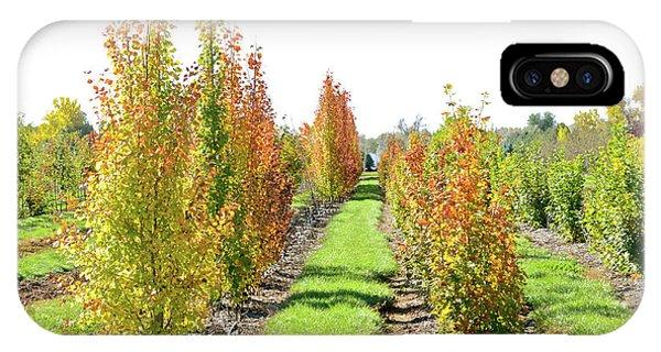 Fall On The Tree Farm IPhone Case