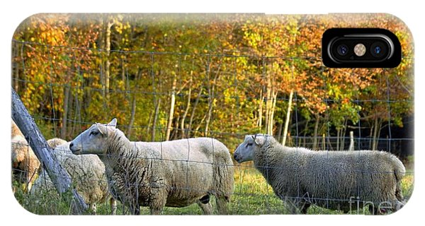 Fall Sheep IPhone Case