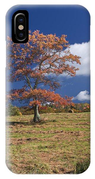 Fall Tree IPhone Case