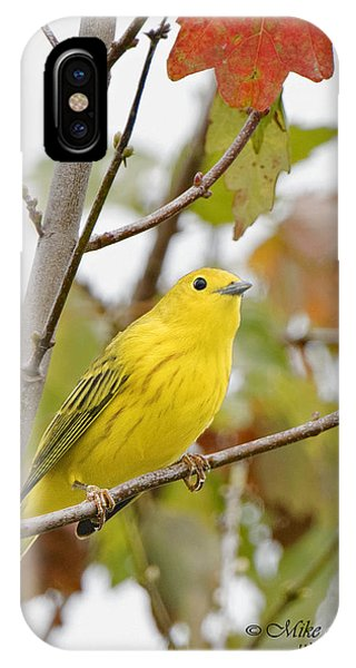 Fall Warbler IPhone Case