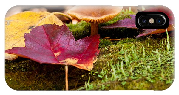 Fallen Leaves And Mushrooms IPhone Case