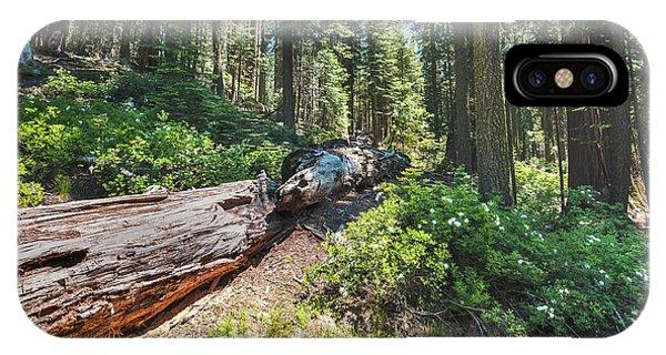 Fallen Tree- IPhone Case