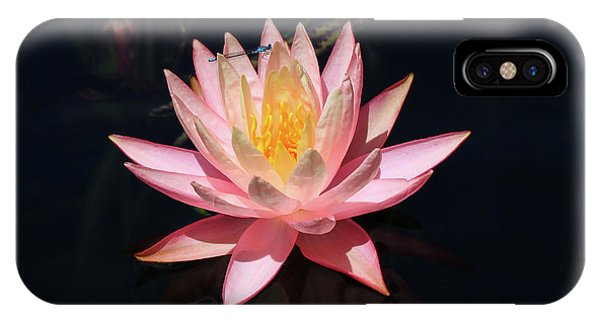 Familiar Bluet Damselfly And Lotus  IPhone Case