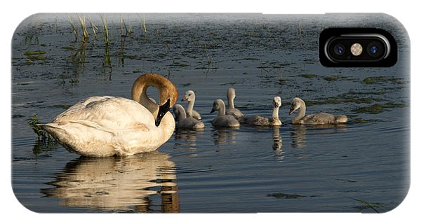 Horicon Marsh iPhone Case - Family Outing by Jayne Gohr
