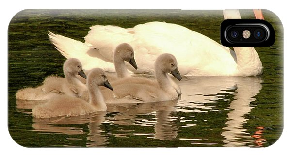 Family Swan  IPhone Case