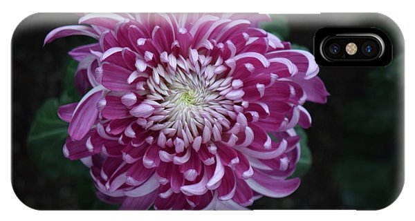 Fancy Chrysanthemum In Pink IPhone Case
