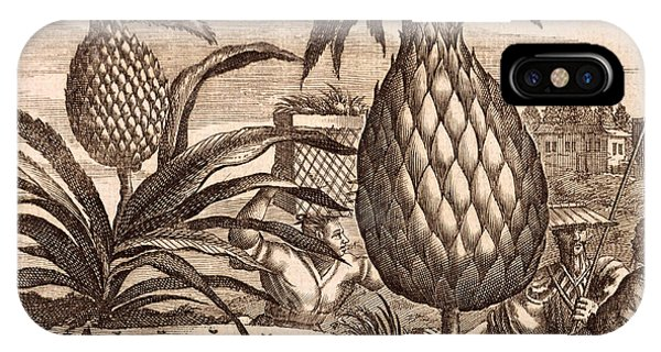 Organic iPhone Case - Farming Large Pineapples by English School
