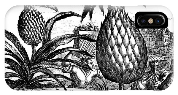 Organic iPhone Case - Farming Large Pineapples, Illustration From A Description Of Embassies To China, 1690  by English School