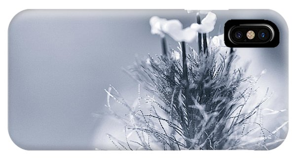 Tradescantia iPhone Case - Fascination by Caitlyn Grasso