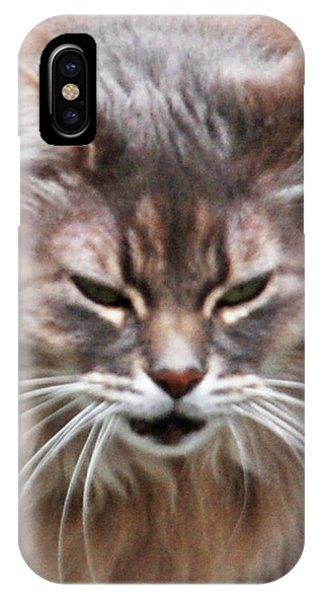 Fat Cats Of Ballard 4 IPhone Case
