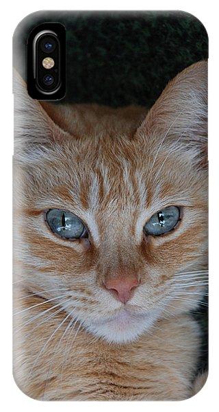 Fat Cats Of Ballard 5 IPhone Case