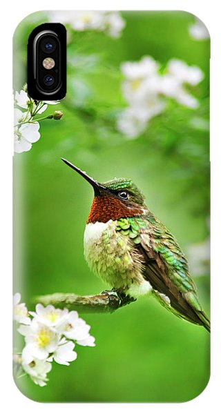 Fauna And Flora - Hummingbird With Flowers IPhone Case