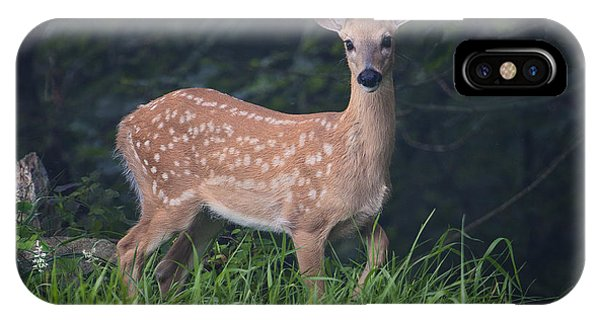 Fawn Doe IPhone Case