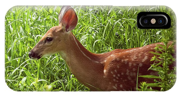 Fawn In The Meadow IPhone Case