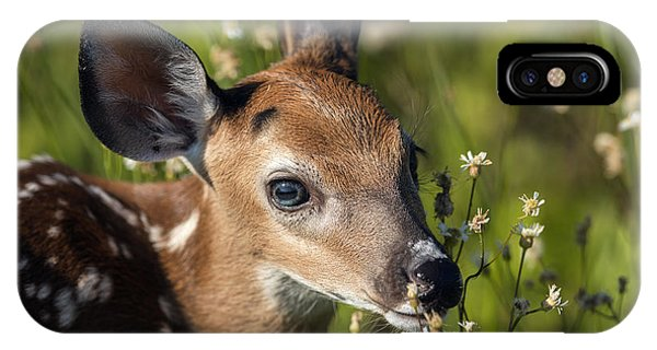 Fawn In Wildflowers IPhone Case