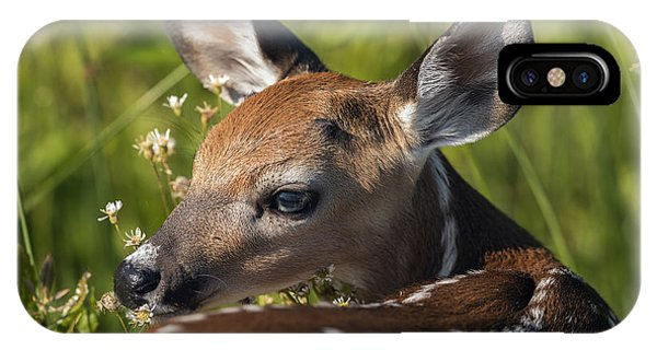 Fawn Over The Shoulder IPhone Case